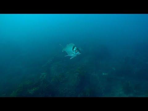 An Amazing Tarakihi Spot