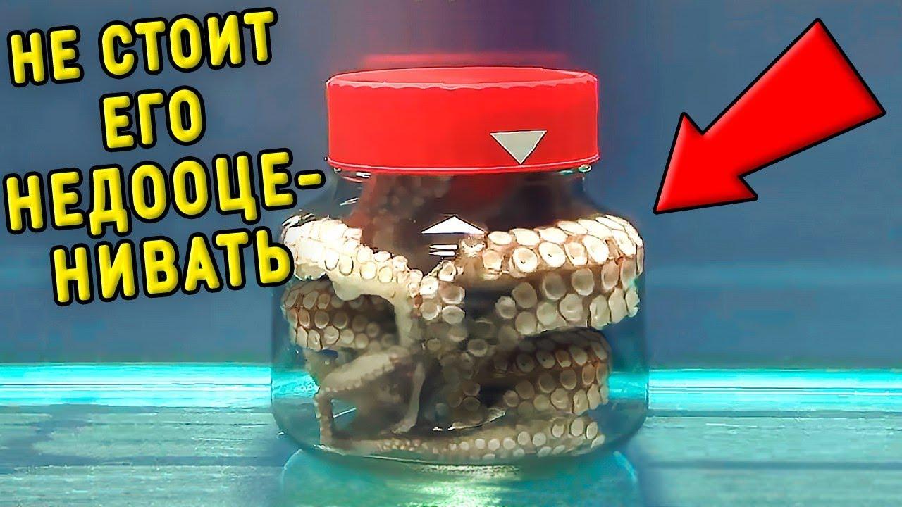 Смотри, что Будет, если Осьминога Закрыть в Банке! 8 Умных Животных