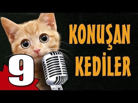 Konuşan Kediler 9 - En Komik Kedi ları