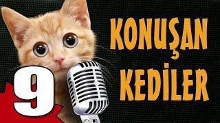 Konuşan Kediler 9 - En Komik Kedi Videoları
