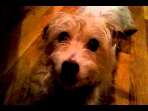 video-2012-11-04-20-18-19.mp4