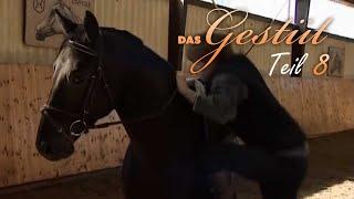 Das Gestüt - Teil 8 - Junge Pferde, Junge Reiter Doku für Kinder, Dokumentation deutsch, Lehrfilm