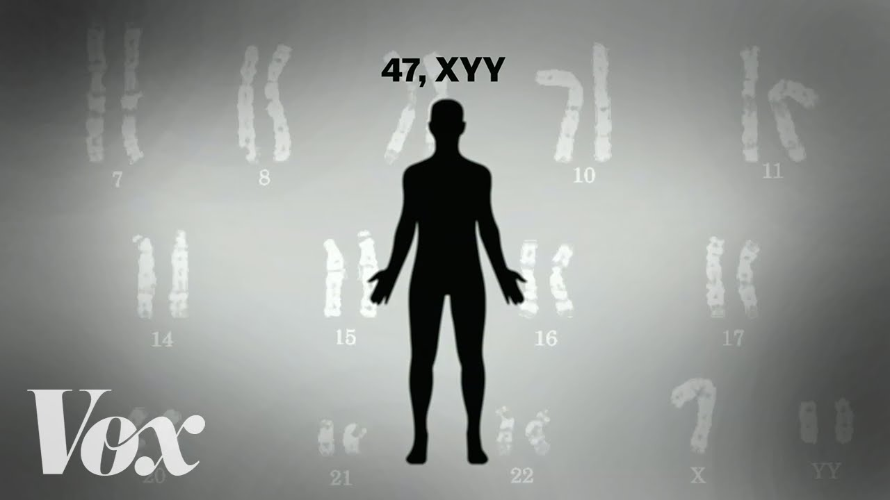 """The myth of the """"supermale"""" and the extra Y chromosome"""