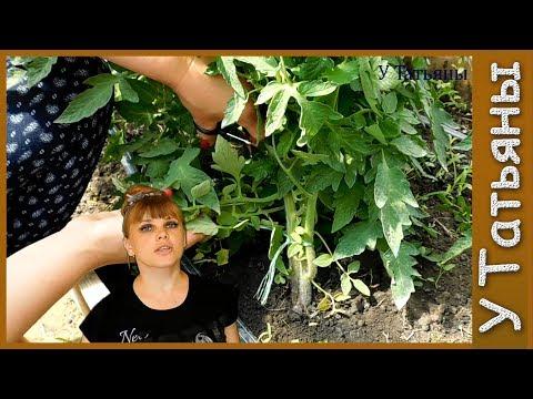 уход за капустой в открытом грунте нужно ли обрывать нижние листья