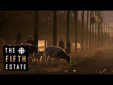 The Mennonite Mob (1992) - the fifth estate