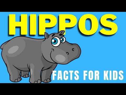 All About Hippos For Kids | Facts About Hippos | Hippopotamus
