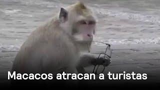 Macacos robando - Naturaleza - En Punto con Denise Maerker thumbnail