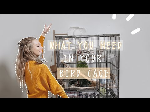 COCKATIEL CAGE SETUP | What's in my bird cage?