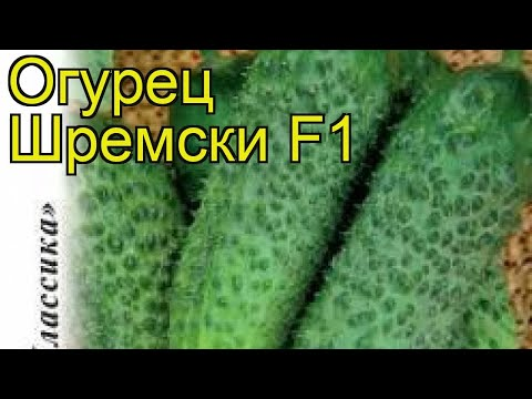 Огурец Шремски F1 (Огурец). Краткий обзор, описание характеристик, где купить семена cucumis sativus