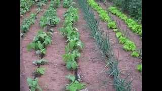 Man Of Peace Development Saving Water In African Agriculture With Irrigation