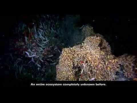 Hydrothermal Vent Creatures  Smithsonian Ocean Portal