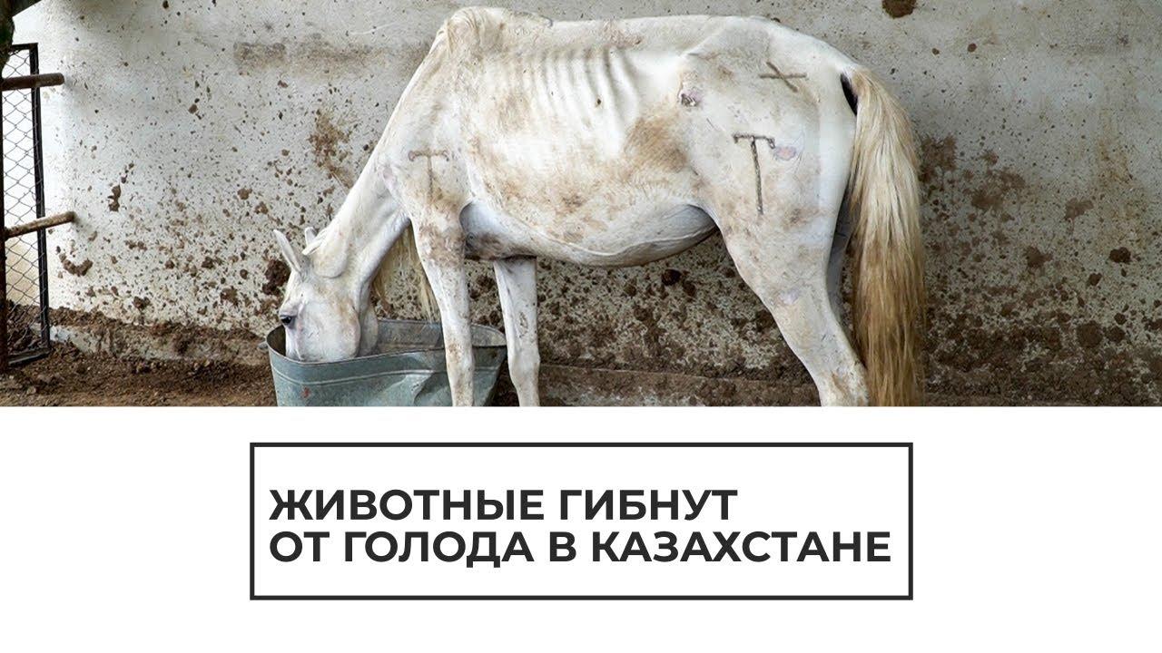 В Казахстане животные гибнут от голода