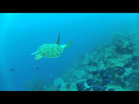 St Croix Diving The Wall - Carambola Beach