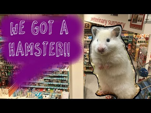 Adopting a New Hamster? | Shopping In Pets At Home & Ikea