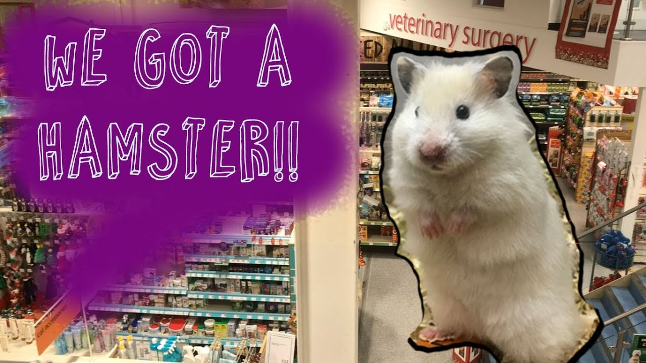 Adopting A New Hamster Shopping In Pets At Home Ikea Youtube