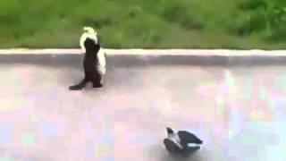 кошка и ворона?    ВОЙНА