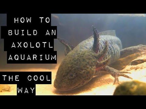 How to build an Axolotl aquarium, the cool way.