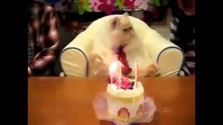 Поющие коты(Это видео создано с помощью видеоредактора YouTube (http://www.youtube.com/editor), 2015-07-12T21:38:38.000Z)