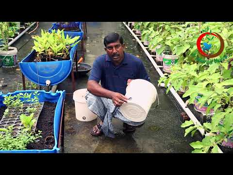 Terrace Gardening | Container Gardening Ideas