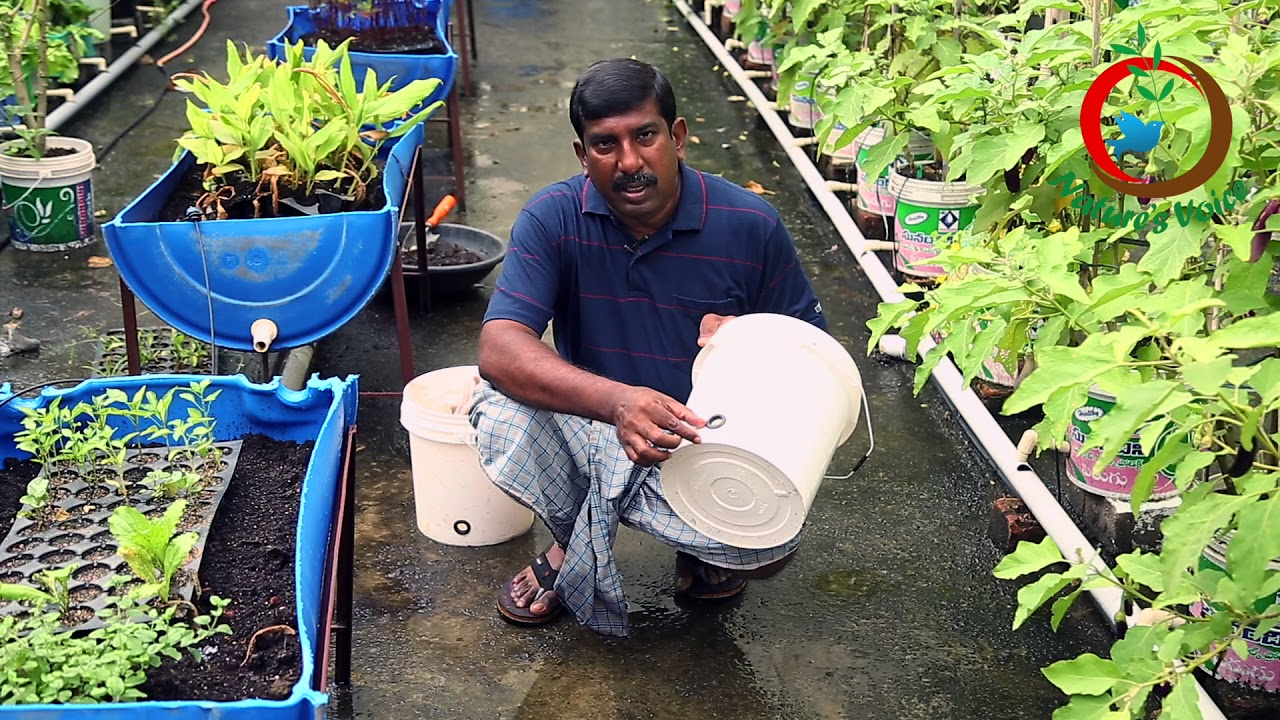 Terrace Gardening Container Gardening Ideas క ట య నర