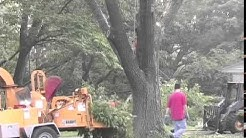 Professional Tree Cutting and Cleanup - Stoltzfus Tree Service