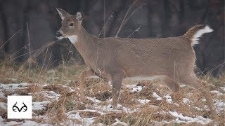 Doe Management | What Is The Right Formula? | The Reason For The Hunt