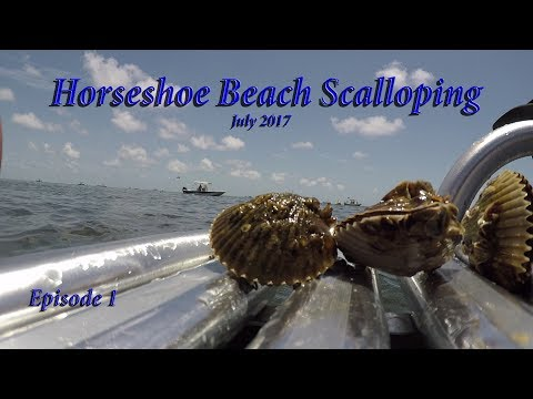 ep. 1 Horseshoe Beach Scalloping trip, Hero 5 black under wa