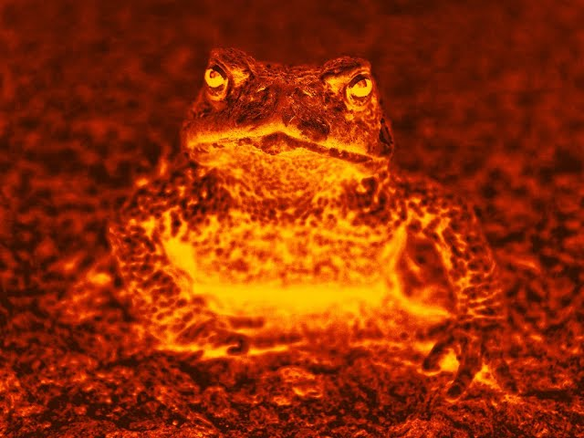 Harry's Video Blog - Frogs On Fire: Parshat Va'Eira