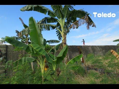Toledo City, Cebu, Philippines (Outskirts)
