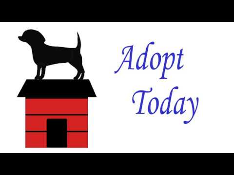 Adopt Today Logo