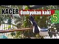 Kacer Omyokan Full Tembakan Isian Gaya Bukor  Mp3 - Mp4 Download