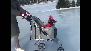 How Canadian Dogs Get Around thumbnail