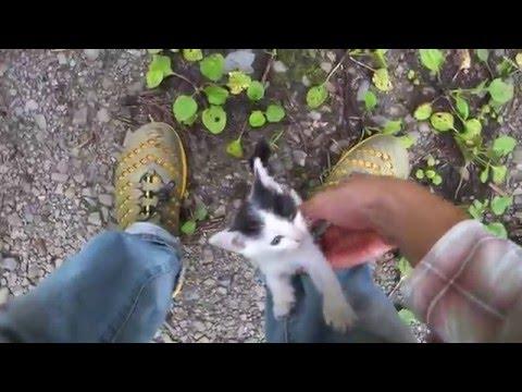 バイクで林道行ったら子猫が捨てられてたので持って帰ってみた。その1(I got a cat in the forest part1)