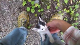 「その1」バイクで林道行ったら子猫が捨てられてたので持って帰ってみた。(I got a cat in the forest part1) thumbnail
