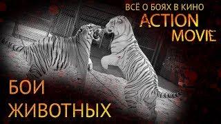 18 БОИ ЖИВОТНЫХ / FIGHTING ANIMALS