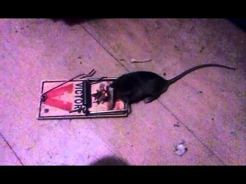 Mousetrap Is A Mindtrap Youtube