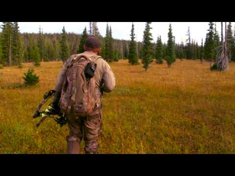 Wyoming archery non typical moose hunt