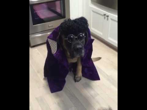 The Mastiff formally known as #Tufton