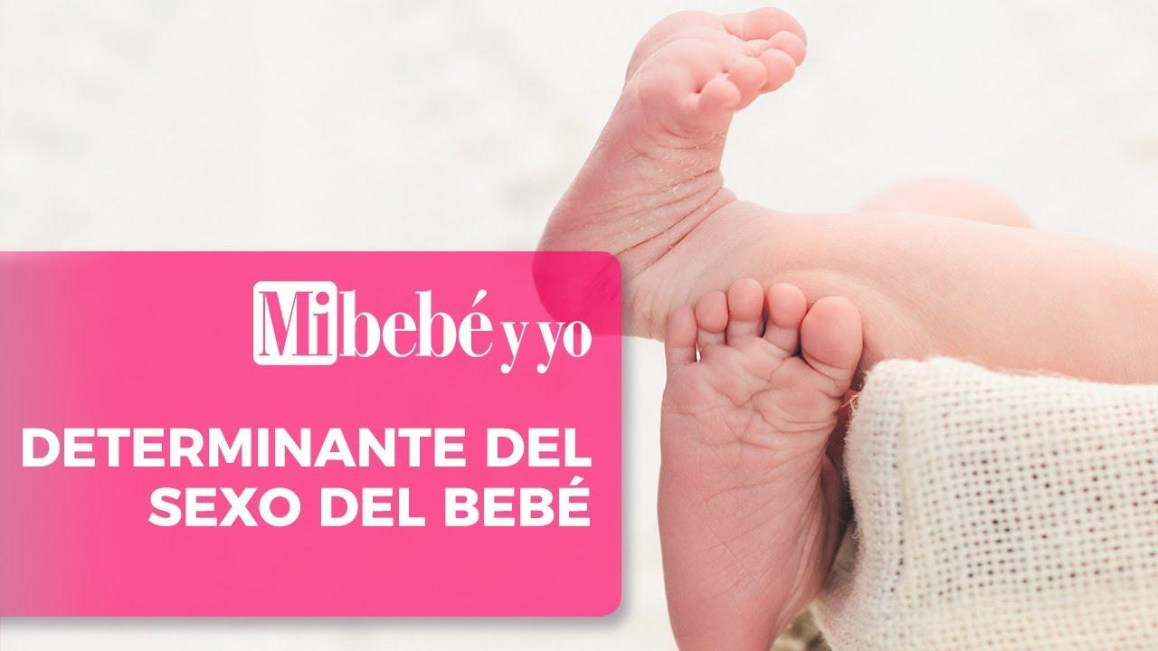 quien determina el sexo del bebe
