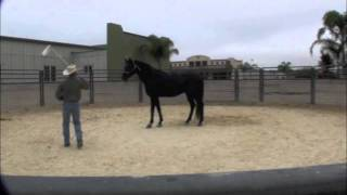 Teaching a Horse to Not Be Afraid of Plastic Bags