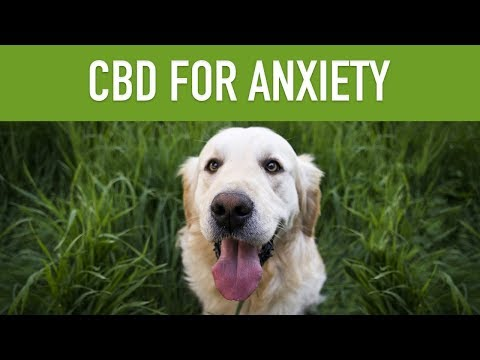 CBD Oil for Dogs With Anxiety - Stop Your Pup's Worrying