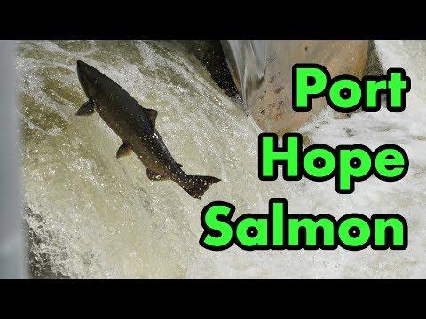 Port Hope Salmon Migration 2017