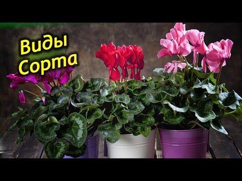 Вопрос: Какие редко цветущие виды растений существуют?