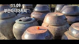 11.09 율마월동 난로준비 쌀쌀해진 날씨! 전북 부안…