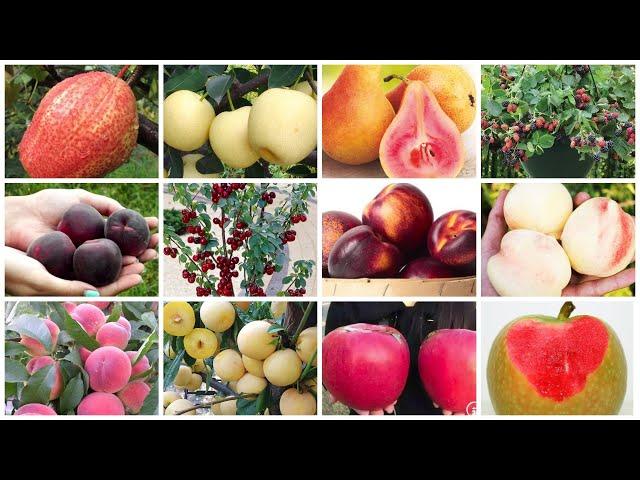 СНОГСШИБАТЕЛЬНЫЕ НОВИНКИ в нашей коллекции саженцев плодовых деревьев и кустарников!