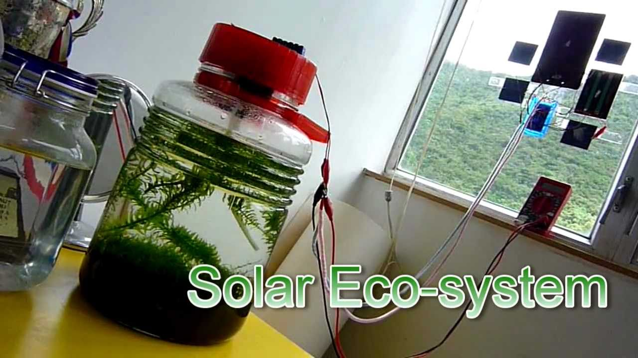 Attractive Solar Ecosphere, DIY A Enclosed Solar Ecosystem   YouTube