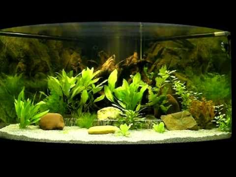 mein aquarium youtube. Black Bedroom Furniture Sets. Home Design Ideas