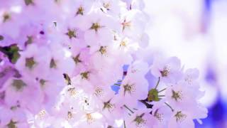 桜が咲き始め、色々な別れや旅立ちがあり・・・・この時期に似合う曲。...