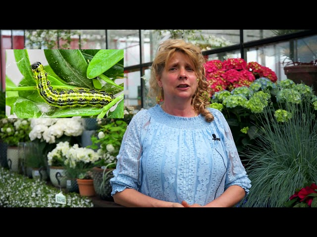 Welke planten kan ik combineren? | Hoe Buxusmot bestrijden? | Voorjaartips
