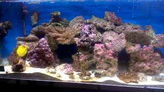 My 55 Gallon Saltwater Tank Update Video Pt 7